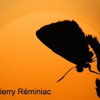 thierry-reminiac-02CC